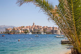 Korcula Island and palm tree, climatic place in Croatia - 169818692