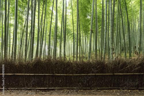 Fotobehang Bamboe Arashiyama Bamboo Forest in Kyoto
