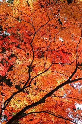 Foto op Canvas Baksteen 紅葉
