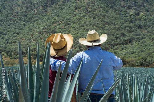 Contemplando el campo de agave para el tequila.