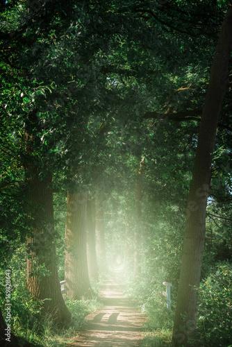 Papiers peints Route dans la forêt Trees along misty country path.