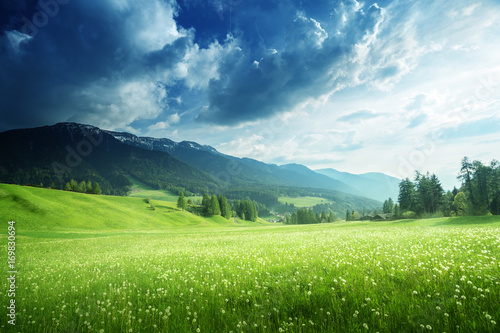 Aluminium Zomer field of spring dandelions in Dolomites, South Tyrol, Italy