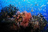 Beautiful tropical coral reef - 169844021