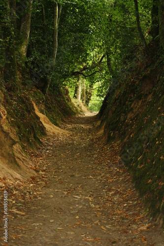 Fotobehang Weg in bos Allée