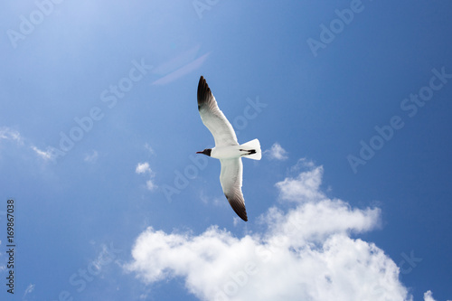Fotobehang One seagull on the blue sky background