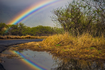 A rainbow in tropical forest near road with reflection in water of puddle