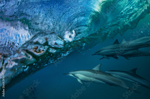 Aluminium Dolfijn Dolphins Under Wave. Sea water full of life