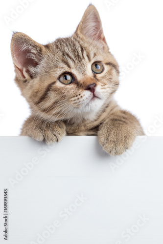 Deurstickers Franse bulldog Cat kitten looking up above white banner isolated