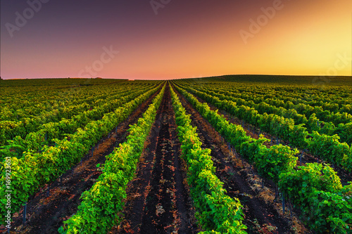 Foto op Canvas Wijngaard Beautiful Sunset over field of vineyard valley in Europe