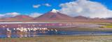Fototapety Flamingoes in Laguna Colorada , Uyuni, Bolivia