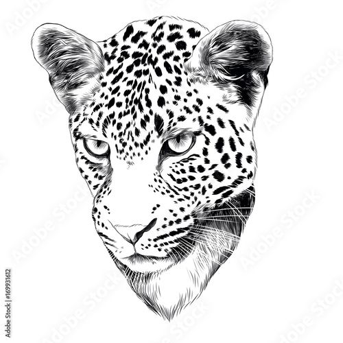 Fototapeta leopard head drawing sketch vector graphics monochrome black and white