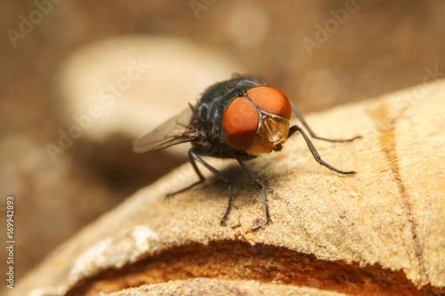 The flies in orange fill Poster