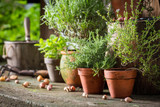Aromatic and healthy herbs on the old porch - 169947822