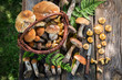 Edible wild mushrooms straight from the forest - 169948003