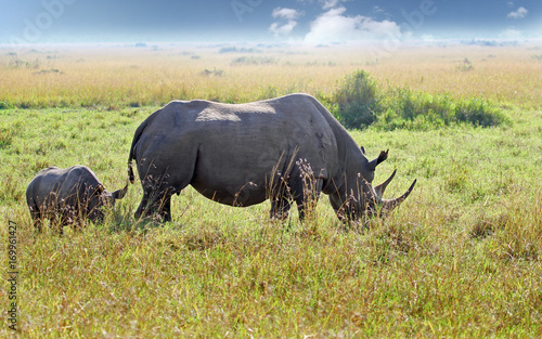 Aluminium Neushoorn Mother and Calf Black Rhinocerous on the vast open plains of the Masai Mara, Kenya