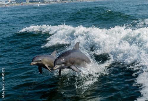 Fotobehang Dolfijn Dolphin