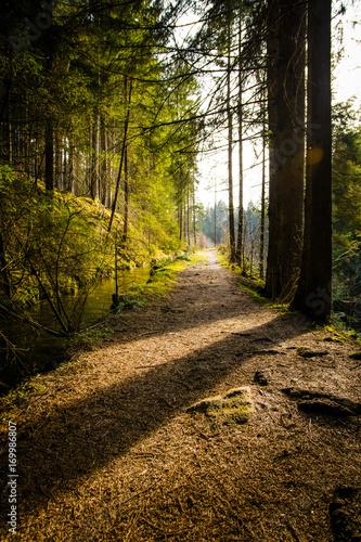 Weg im Wald Waldweg