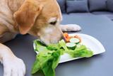 labrador retriever eats vegetables from a plate