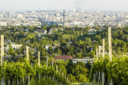 Tuinposter Wenen Wien, Kahlenberg, Weingarten, Blick auf die Stadt, Österreich,