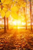 Fototapety  Autumn leaves on the sun