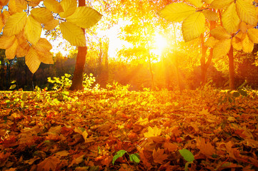 Autumn leaves on the sun