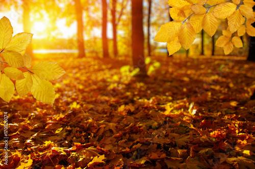 Autumn leaves on the sun
