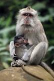 Family of monkeys - 170046080