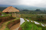 Terraced rice - 170046684