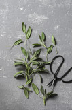 Fresh sage leaves and vintage scissors on a grey background, top view. Free space - 170059632