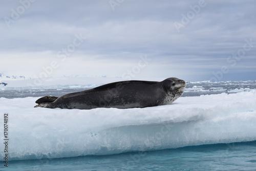 antartica Poster