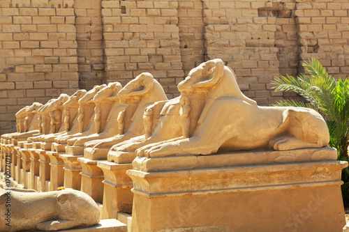 Staande foto Athene Ram headed sphinxes at Karnak temple, Luxor in Egypt