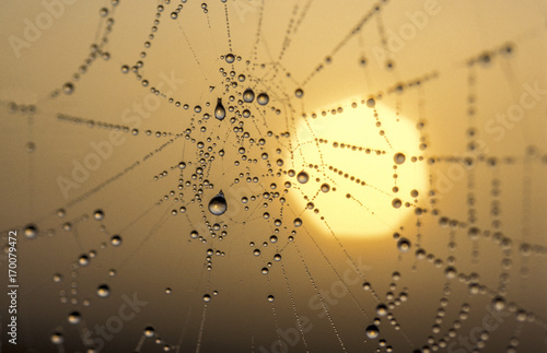 Poster Spinnennetz