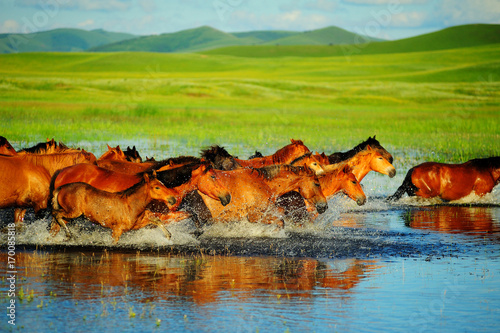 Horses running on water at grassland.