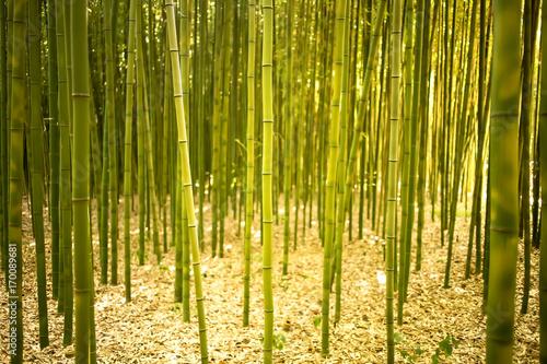 Fotobehang Bamboe Korea bamboo