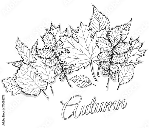 Autumn leaves set for coloring page vector