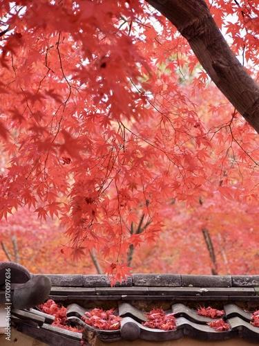 Aluminium Kyoto Kyoto,Japan