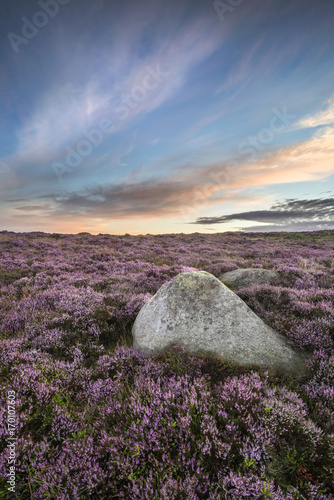 Foto op Plexiglas Cappuccino Stunning dawn sunrise landscape image of heather on Higger Tor in Summer in Peak District England