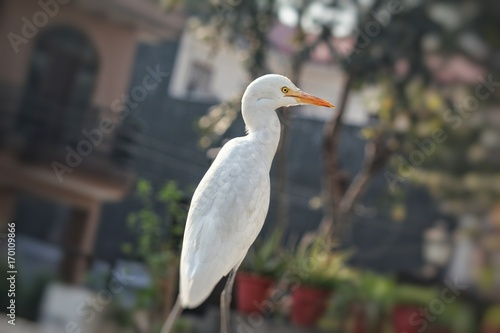 A white crane sitting on a fence with greenery in the background