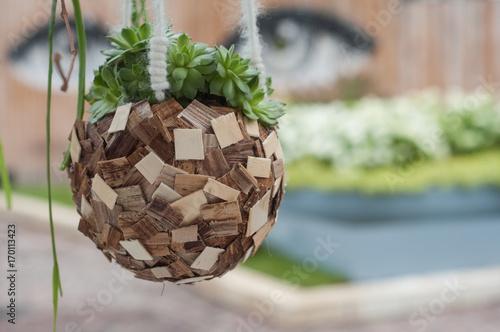 plante grasse suspendu dans un pot en bois Poster