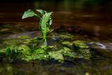 Tajemniczy strumień jak rwący potok