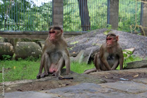 Aluminium Aap Para małp
