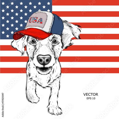cocker-spaniel-w-amerykanskiej-czapce-szczeniak-na-tle-amerykanskiej-flagi-ilustracji-wektorowych