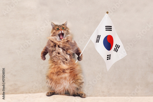 Fotobehang Seoel The big shaggy cat is very funny standing.flag