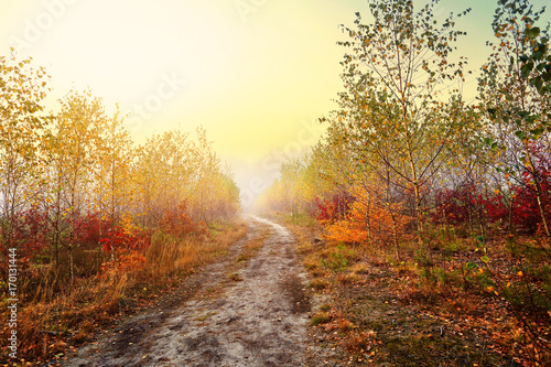 Autumn countryside path on a colorful clearing
