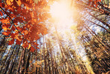Autumn colorful and sunny forest