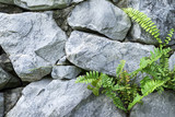 The stone wall and ferns out of the stone niche.