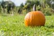 Kürbis zum Fest Halloween