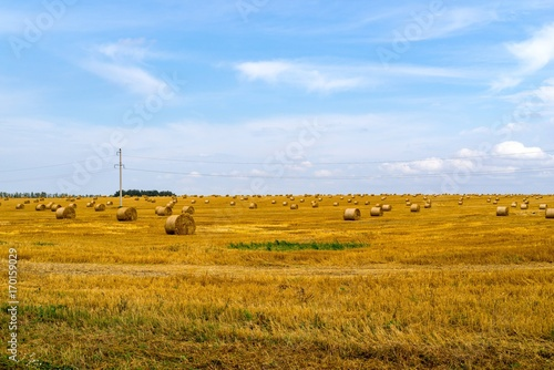 Aluminium Blauwe hemel agricultural landscape of the field