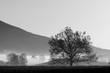 Black and white landscape of beautiful tree in the Smoky Mountains