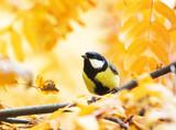 little bird sitting in autumn Park on a background of Golden foliage